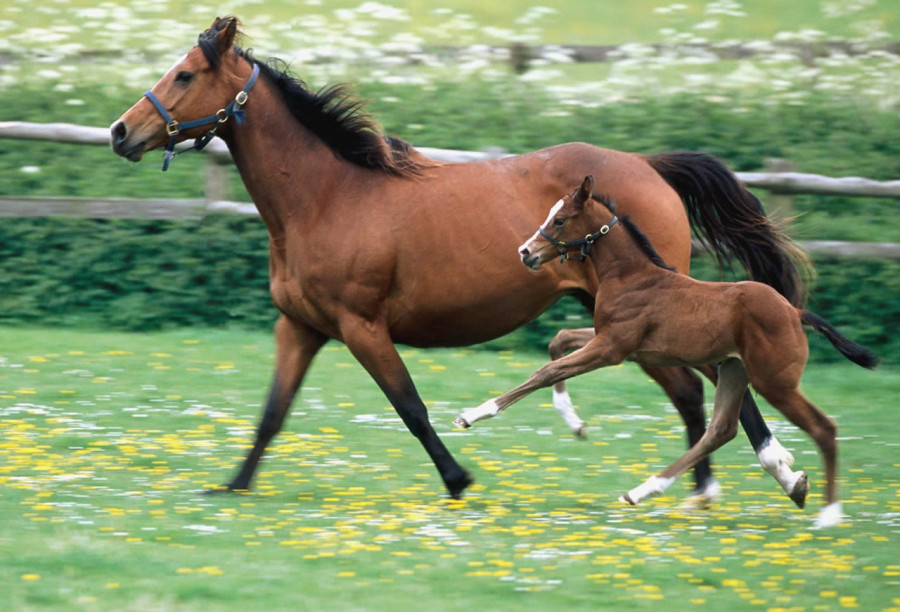 pictures-of-horses-and-foals-7